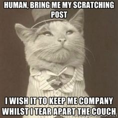 Aristocat meme - human, bring me my scratching post I wish it to keep me company whilst i tear apart the couch