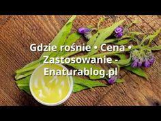 ► Żywokost lekarski - TOP 5 zastosowań | Gdzie rośnie? ► Polski żeń szeń ◄ - YouTube