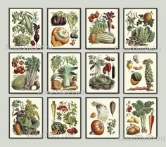 Vegetable Print Set of 12 Art Prints Antique Beautiful Eggplant Pumpkin Cabbage Brussels Sprout Tomato Onion Carrot Potato Green Vegeterian Garden Nature Home Room Decor Wall Art Unframed LPP. Beautiful set of 12 prints based on antique botanical illustrations from 1850. Wonderful details, colors and natural history feel. • The prints measure 4x6, 5x7, 8x10, or 11x14 inch. based on your selection come with a white border for easy framing. • Printed on professional artist archival matte...