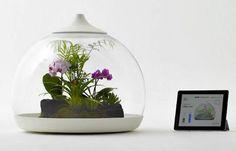 Eco Friendly Home Decorations, Biome Smart Terrarium Design Ideas