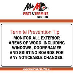 General Pest Control Termite Eradication Termite  Control Termite Inspections