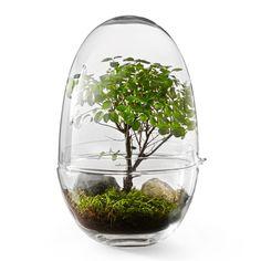 Växthus Grow XL