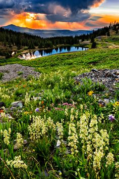 Wildflowers filled Gold King Basin, CO with vivid colors and the setting sun added it's own colors to the sky
