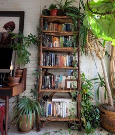 What are you reading tonight? :@srmanitou #urbanjunglebloggers #plantshelfie