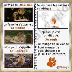 Fiche pour enfant du lion d'Afrique