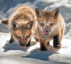 """beautiful-wildlife: """" Une oubliée du printemps dernier by Jocelyne Feizo """""""