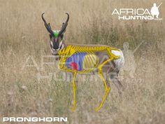 shot placement Big Game Hunting, Hunting Tips, Elk Hunting, Hunting Stuff, Africa Hunting, Antelope Hunting, Safari, Urban Survival, Archery
