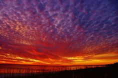"""""""Fall and the Beauty of it All""""  http://facebook.com/myforgottencoast   11-24-13 Taken at Mexico Beach, on way to eat there. Timing was perfect one ONE gorgeous sunset.    Photo Credit: Joan Harlow..   AMATEUR DIVISION: Mexico Beach"""