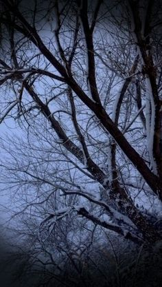 """""""Snow Day?"""" www.afphotos.com"""