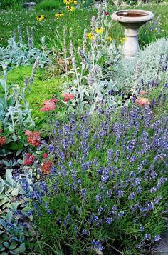 pollinator friendly plantings  http://www.joenesgarden.com