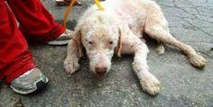 Αποτέλεσμα εικόνας για ADESPOTAKIA GERAKA Dogs, Animals, Animales, Animaux, Pet Dogs, Doggies, Animal, Animais