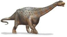Titanosaur Titanosauria Argentine