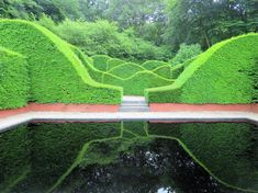 imagining the layered sculpting... wave topiary hedge