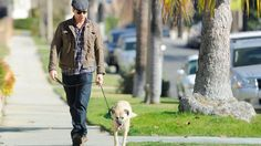 'I Can Do No Wrong': Celebs and Their Shelter Pets | NBC New York