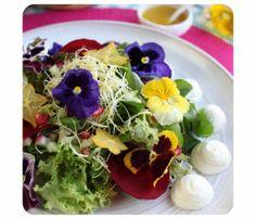 Conheça as flores comestíveis
