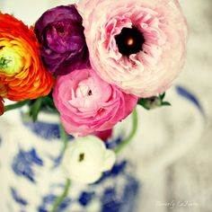 colors of happiness, fine art print, flowers, ranuculus photo by BeverlyLeFevre via Etsy #fpoe