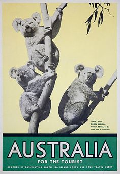 Australia [picture] : for the tourist : world's most lovable animals, Koala bears, to be seen only in Australia. Sydney, Melbourne, Posters Australia, Australia Pictures, Australian Vintage, Australian Art, Museum Poster, Tourism Poster, Retro Poster