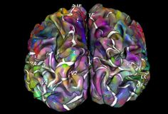 Futurity.org – Interactive map: how the brain sorts what we see