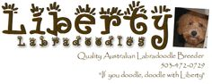 we are Liberty Labradoodles, breeders of fine multi-generational Australian Labradoodles. We are located in Yamhill County in Oregon on a five acre farm … Labradoodle Breeders, Australian Labradoodle Puppies, Goldendoodle Puppy For Sale, You Doodle, Puppies For Sale, Logo, Nature, Logos, Naturaleza