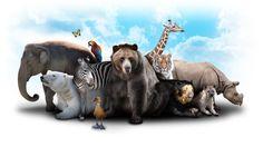 Dia Mundial dos Animais: a importância deles na vida das pessoas