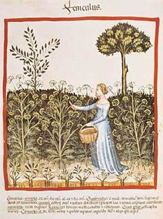 14. Jahrhundert, Hausbuch d. Cerruti / Fenchel/Ende 14.Jh