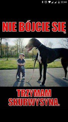 Stupid Funny Memes, Wtf Funny, Hilarious, Polish Memes, Weekend Humor, Funny Mems, Nyan Cat, Sarcastic Humor, Man Humor