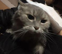 愛猫さくら姫 SHOOP+FACTORY(シュープ・ファクトリー)@オーナーブログ-5ページ目