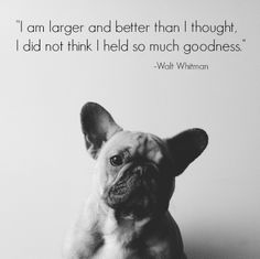 French Bulldog Puppy and Walt Whitman quote