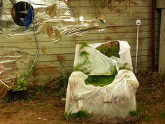 'Sesselgras unter Aufsicht' ein Foto von 'froodmat'