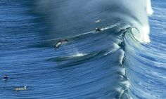 Dolphin puts surfer to shame by making small fry of the San Diego waves as large surf rolls into the county