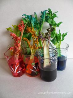 RAINBOW-celery-stalks-every-color-St.-Patrick's-Day-Rainbow-Science-for-Kids