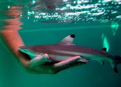 little shark- its not the cute little shark that you see that is dangerous..it is what may be comming after it!!!