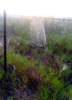 Spiderweb at dawn.