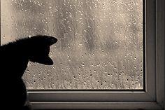 Cuando disfrutas el sonido de la lluvia, una tarde lluviosa se convierte en una tarde danettizada.