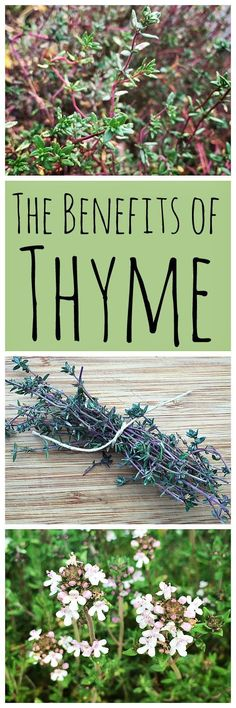 Thyme is an awesome herb to have around! Not only is it great for cooking, but it's also medicinal and good for the garden.