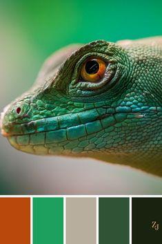ZJ Colour Palette 462 #colourpalette #colourinspiration