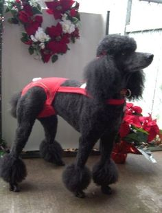 Joybies Red Festive Christmas Piddle Pantstm for X Large Male Dog Measuring 1922 Along Back From Collar to Base of Tail * You can find more details by visiting the image link.(This is an Amazon affiliate link and I receive a commission for the sales)