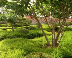 Rhus typhina & hakonechloa macra nicolas - Tom Stuart-Smith garden detail