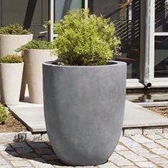 Campania International, Inc Kuro Terracotta Pot Planter