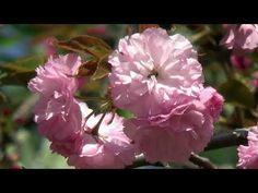Culorile primăverii – partea a II-a