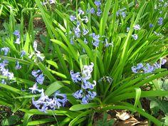 Φύτεμα καλλιέργεια: λουλούδια από βολβούς Vegetables, Garden, Plants, Decoration, Decor, Garten, Lawn And Garden, Vegetable Recipes, Gardens