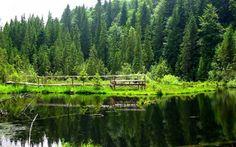 """Lacul Negru, sau """"lacul cu plămână"""" este unul dintre cele mai frumoase locuri din Vrancea, aflat în Rezervaţia Naturală Cheile Nărujei.    Citeste mai mult: adev.ro/nstfm7 Mother Earth, Romania, Blessed, River, Mountains, Outdoor, Plant, Outdoors, Outdoor Games"""