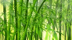 Bamboo Forest Nature Wallpaper