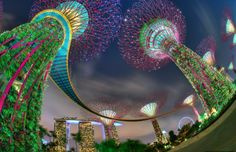 """Gardens by the Bay ~ Singapore ~ Every evening for fifteen minutes the trees are lit up for a light show, the lights dancing in sync with the music (looks great in the larger view, just click on it). ~ Miks' Pics """"Gardens by the Bay ~ Singapore"""" board @ http://www.pinterest.com/msmgish/gardens-by-the-bay-~-singapore/"""
