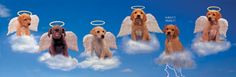 not all dogs go to heaven