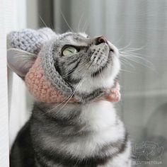 From @yuka_cal: It will be cold tonight #cutepetclub [source: http://ift.tt/2mYSZAa ]