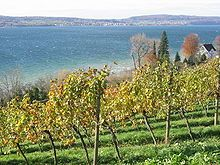 Vineyards on Lake Constance, the southernmost part of Baden as well as the southernmost vineyards in Germany.Baden is Germany's longest wine region, approximately 400 km (250miles) and reaching from the border of Franken in the north to Lake Constance in the south, and is primarily situated on the eastern bank of river Rhine.