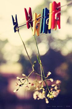 hanging flowers by thresca on DeviantArt James Nachtwey, Line Photography, Beautiful Flowers Wallpapers, Popular Flowers, Hanging Flowers, Hanging Pictures, Clothes Line, Sweet Nothings, Flower Wallpaper