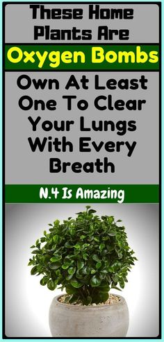 5 Plants to Clear Your Lungs With Every Breath Herbal Remedies, Home Remedies, Natural Remedies, Natural Herbs, Natural Health, Elderberry Shrub, Health Tips, Health And Wellness, Health Care