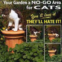 piss off plant keeps dogs and cats out of your garden beds dans le jardin pinterest. Black Bedroom Furniture Sets. Home Design Ideas